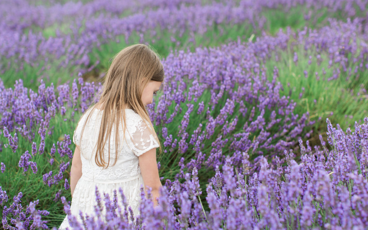 Lavender Mini Sessions